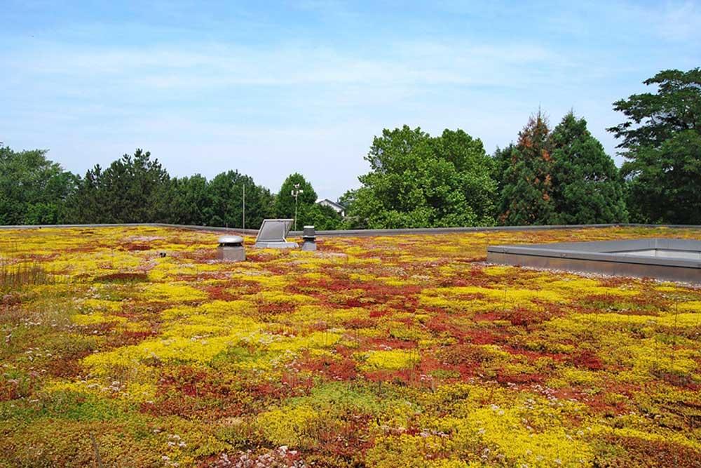 Extensive Dachbegrünung mit einem Sedumteppich