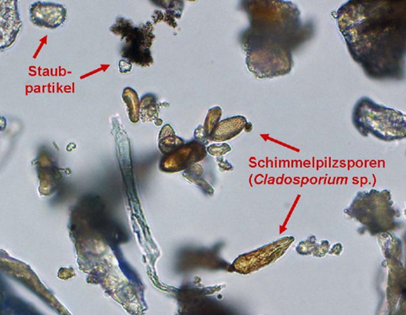 mikroskopie-schimmelpilz-dach